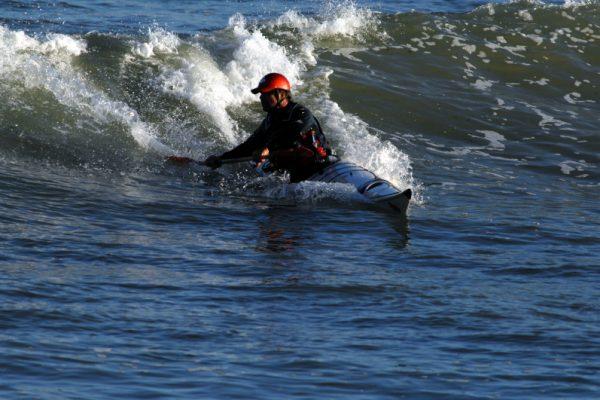 Anas Acuta surf